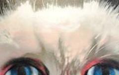 Teaser Grumpy Cat